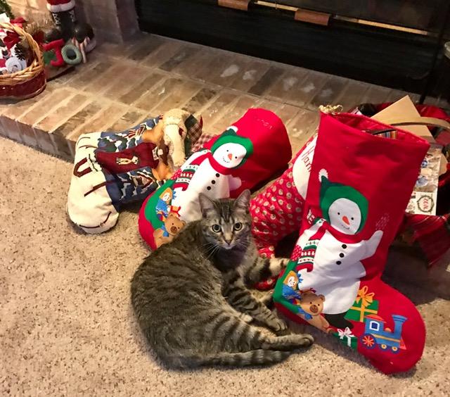 kibbie-stockings