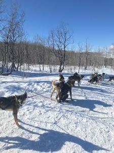 Dog Sledding 2019